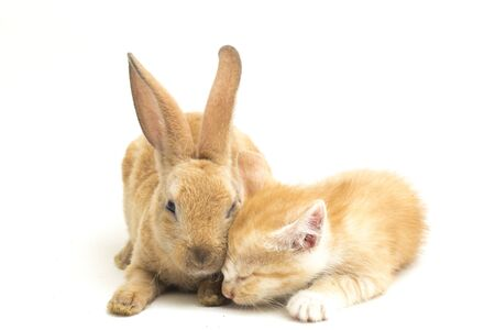 A Beautiful Orange cat kitten and orange-brown cute rabbit funny positions. Animal portrait isolated on white background.