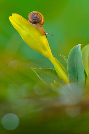 Snail  on flower in tropical garden 写真素材 - 149565655