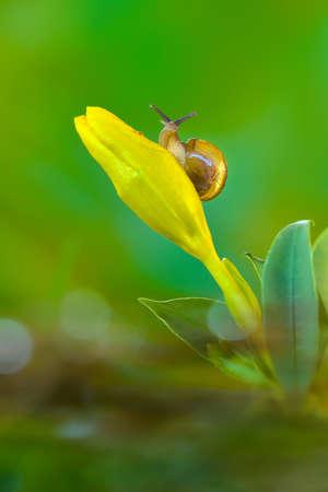 Snail  on flower in tropical garden 写真素材 - 149565659