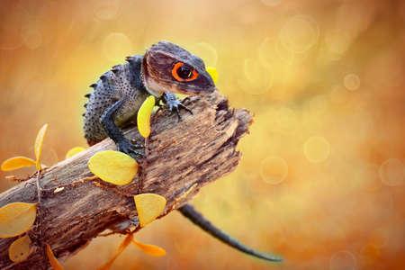 crocodile skink  on flower in tropical garden 写真素材 - 149565664