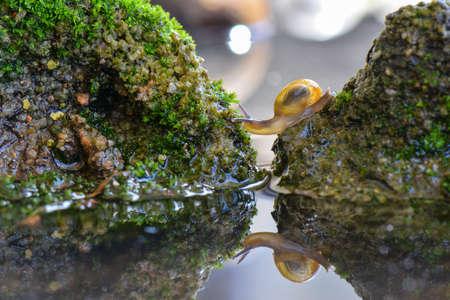Snails cross the water between the rocks