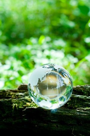 transparence: forest and terrestrial globe Stock Photo