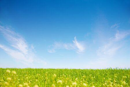 grassy field: grassy plain and blue sky
