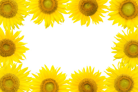 frame of sunflower photo