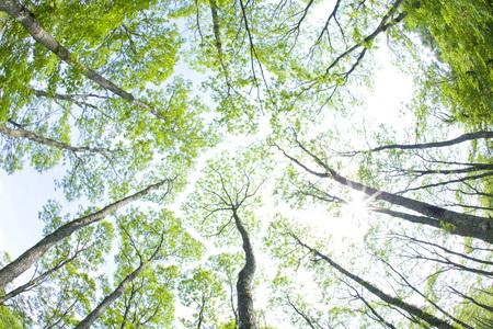 新鮮な緑の森 写真素材