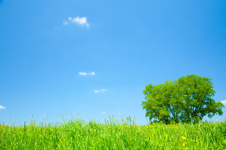 blandness: grassy plain and tree Stock Photo