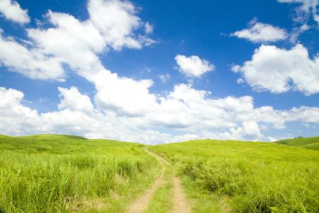 backroad: grassy plain way