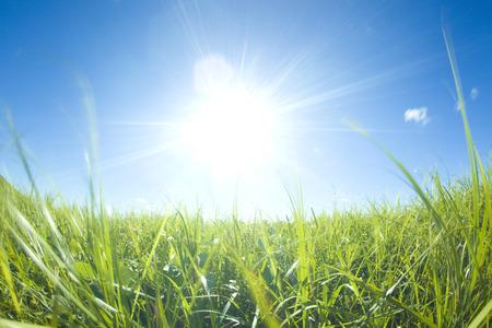 grassy plain and sun
