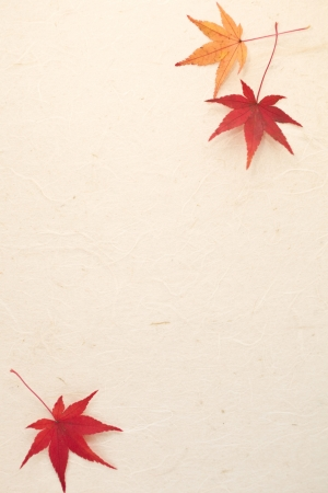 japanese paper: maple and Japanese paper
