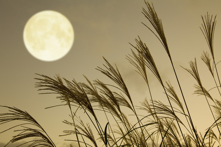 the pampas: pampas grass and full moon Stock Photo