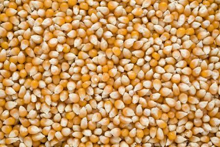 drying: corn