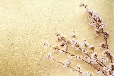 apri: cherry tree and Japanese paper Stock Photo
