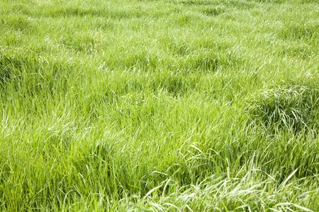 grassy plain Stock Photo
