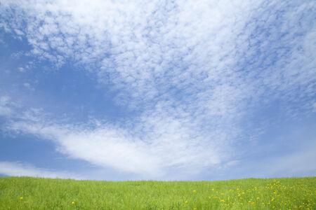 grassy field: Grassy field