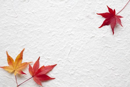 japanese maples: Maple and Japanese paper Stock Photo