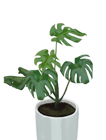 illustration of monstera plant
