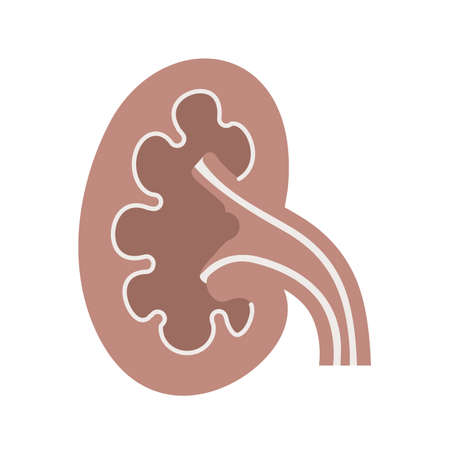 body part: Kidney, organ, body part icon vector image. Can also be used for healthcare and medical. Suitable for web apps, mobile apps and print media.