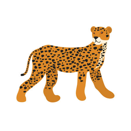 safari animals: Cheetah, safari, kenya icon vector image. Can also be used for Animals and Insects. Suitable for mobile apps, web apps and print media. Illustration