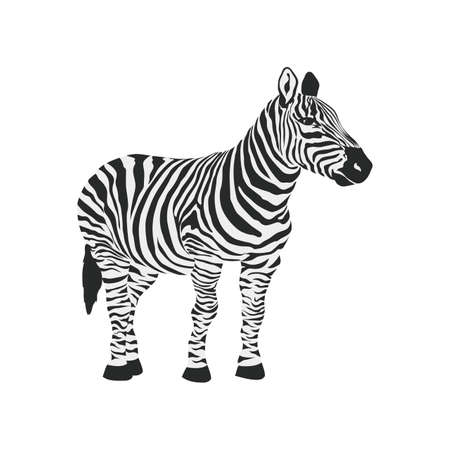 herbivore: Zebra, animals, wild icon vector image. Can also be used for Animals and Insects. Suitable for mobile apps, web apps and print media.