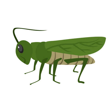 locust: Grasshoppers, green, animal icon vector image. Can also be used for Animals and Insects. Suitable for mobile apps, web apps and print media.
