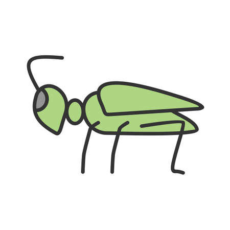 Grasshoppers, green, animal flat design illustration. Vectores