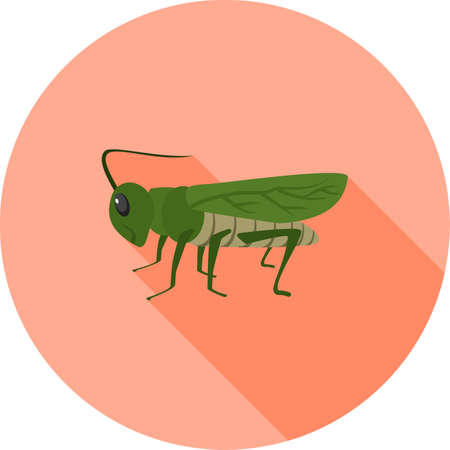 Grasshoppers, green animal 向量圖像
