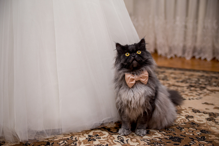 cat in a bow tie sits near the wedding dress of the bride