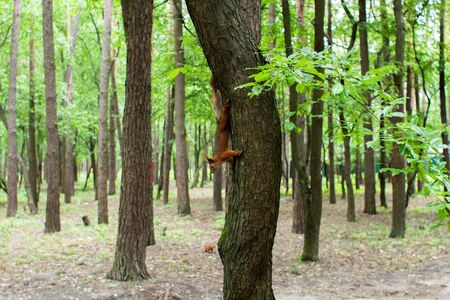 squirrel on tree in the forest 免版税图像