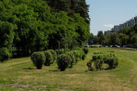 decorative bushes in park among the city
