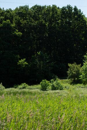 green meadow in forest with trees Archivio Fotografico