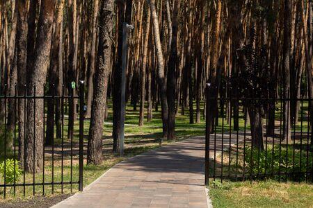 jogging track in pine park 版權商用圖片