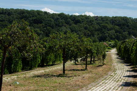 paved walkway in Italian park garden Banco de Imagens
