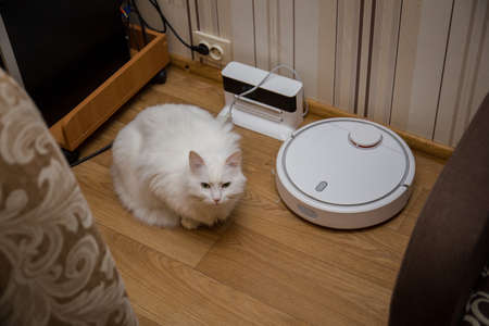 a cat and robot vacuum cleaner in the room Фото со стока