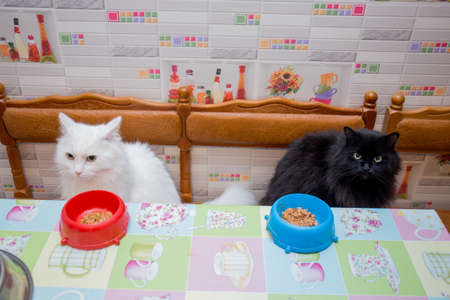 white and black cat together in kitchen