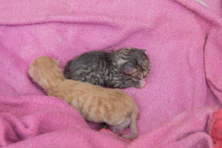 a two kittens lie on the bedspread Imagens