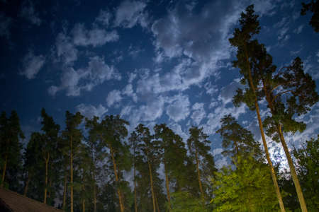 a dark night sky in pine forest Imagens