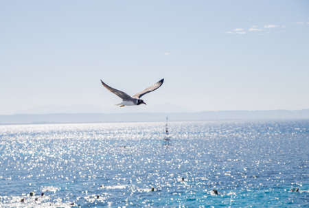 a seagull flies over beautiful sea water Imagens