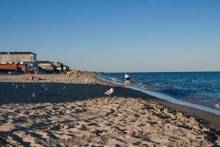 seagulls walk along the beach by sea
