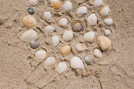 a seashells in the sand on the seashore