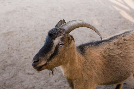 a goats behind the fence at the zoo