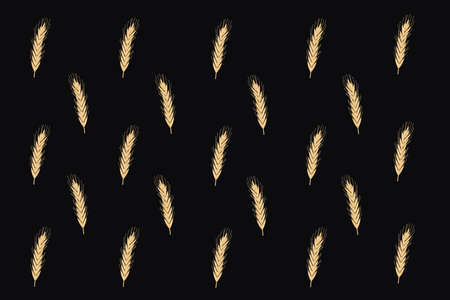 yellow spikelets growth on the farm field backgound Illustration