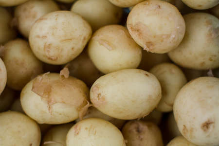 lot of young potatoes background agrarian