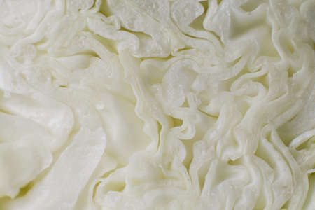 a young fresh cabbage in a cut close-up food background