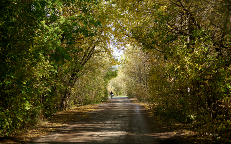 road with an arch of trees