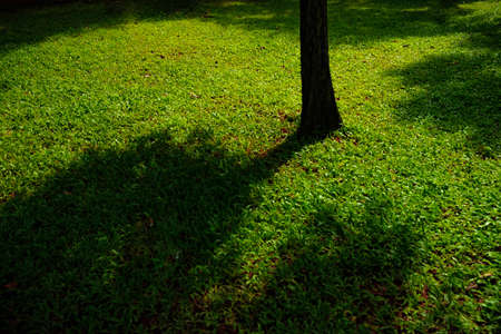 the shadow of the tree seen in thousands of small green grass makes me want to lie on the grass and feel cool and comfortable even if only temporaryly