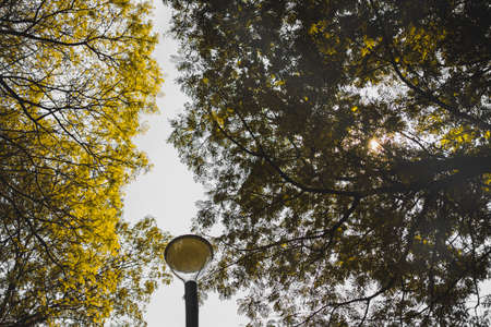 autumn in Jakarta in the middle of last year showed a different view Reklamní fotografie