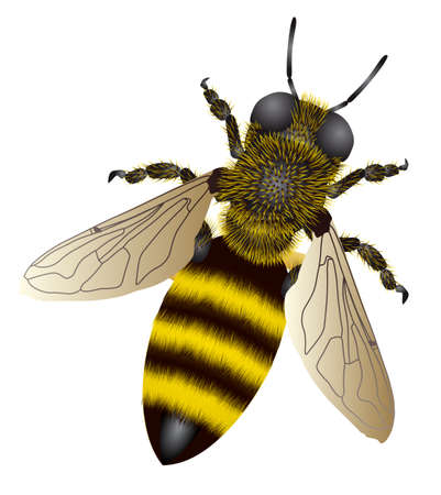 An illustration with a bee