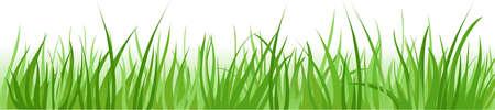 Grass borders background Illustration