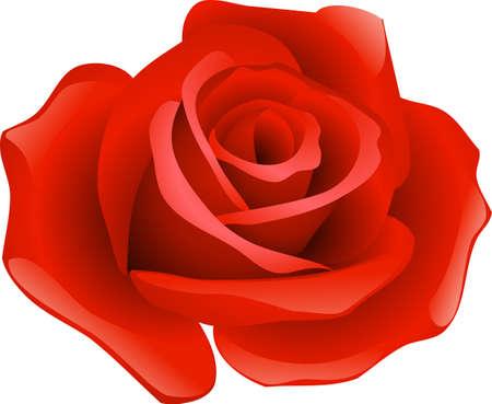 Eine Illustration mit roter Rose