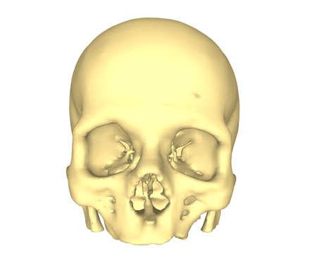 Illustration with skull